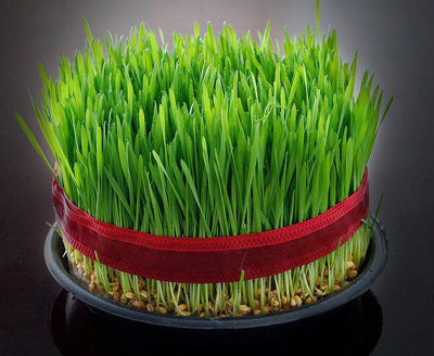 کدام سبزه را برای سفره هفت سین سبز کنیم / اهمیت سبزه در محیط زیست
