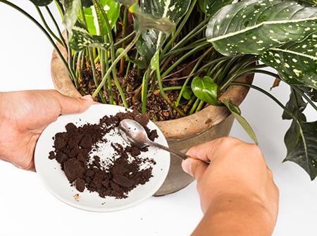 از بین بردن انواع حشرات,مبارزه با حشرات موذی