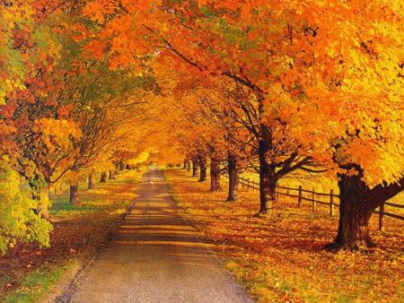 عکس های فصل پاییز, عکس فصل پاییز