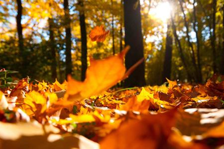 پوستر فصل پاییز, والپیپرهای پاییزی
