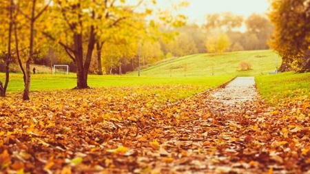 والپیپرهای پاییزی,تصاویر پاییز