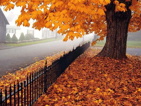 عکس پاییز, تصاویر پاییز