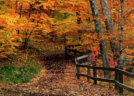 عکس درختان پاییزی, تصاویر زیبای فصل پاییز