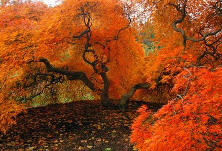 پوسترهای پاییزی,عکس پاییز