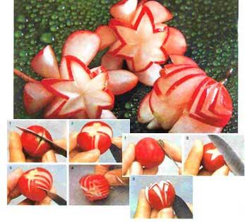 گل بگونیا با تربچه