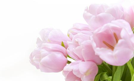 گل بنفشه, تصویر گل