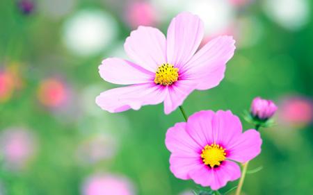 تصاویر گل های زیبا,عکس گل