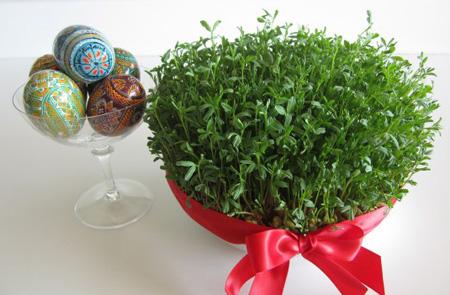 آموزش کاشت سبزه عید, کاشت هسته مرکبات