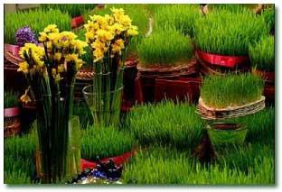 چطور سبزه هفت سین را آماده کنیم؟