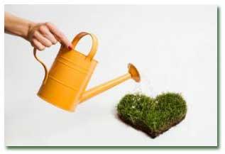 4 نکته درباره آبیاری گیاهان آپارتمانی