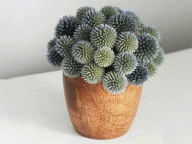 Image result for تصویر گلهای به در گذاشته
