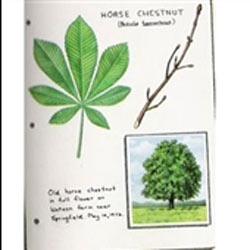 چطور برگها را خشک کنیم؟