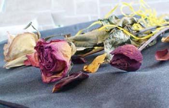 خشک کردن گل ها در ماکروویو, خشک کردن گلهای طبیعی
