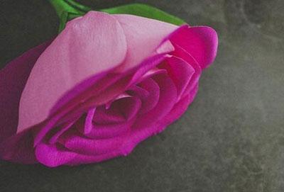 ساخت گل رز کاغذی, آموزش تصویری ساخت گل رز کاغذی