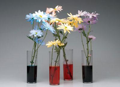 آموزش رنگ کردن گل طبیعی , نحوه رنگ کردن گل های طبیعی
