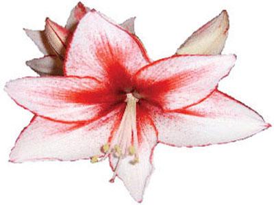 طرز ساخت گل لیلیوم , درست کردن گل لیلیوم