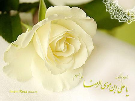 کارت پستال جدید ولادت امام رضا (ع)