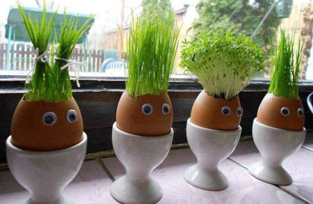 کاشت سبزه در تخم مرغ,تزیین تخم مرغ