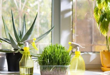 مرطوب کردن هوای خانه,مرطوب کردن خانه بدون دستگاه بخور