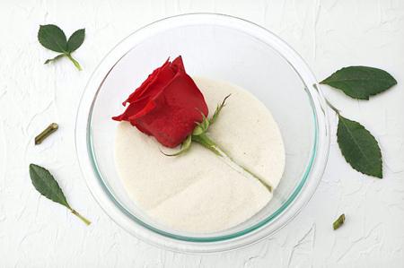 خشک کردن مرحله ای گل های طبیعی,تکنیک های خشک کردن گل ها
