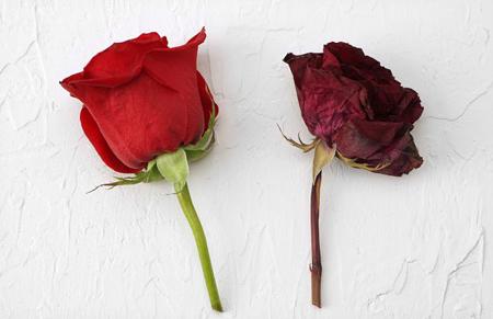 نحوه خشک کردن گل با مايکروويو, خشک کردن انواع گل هاي طبيعي
