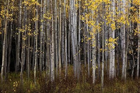 آشنایی با عکاسی از طبیعت پاییزی,تکنیک های عکاسی از طبیعت پاییزی