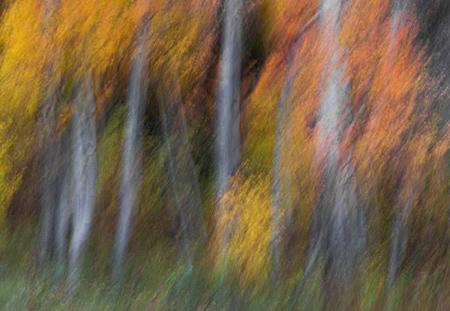 مهارت های عکاسی در پاییز, نکاتی برای عکاسی در پاییز