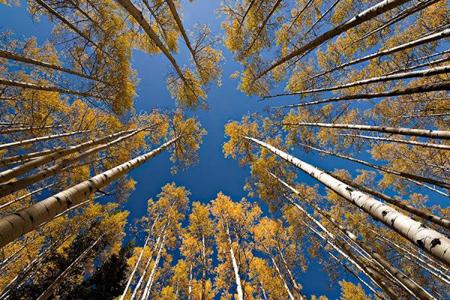 عکاسی از طبیعت پاییزی,آشنایی با عکاسی از طبیعت پاییزی