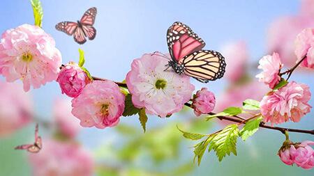 تصاویر پشت زمینه از فصل بهار,تبریک فصل بهار,کارت تبریک آغاز فصل بهار