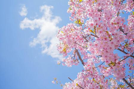 پوسترهای آغاز فصل بهار, کارت پستال های فصل بهار, کارت تبریک آغاز فصل بهار