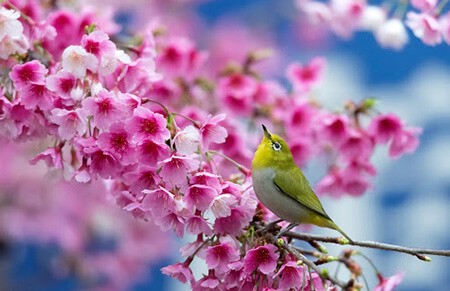 تصاویر پشت زمینه از فصل بهار, عکس های فصل بهار, تصاویر از شکوفه های بهاری
