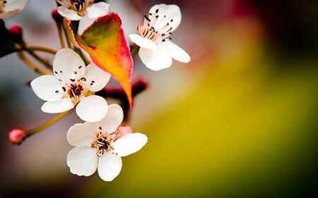 کارت تبریک آغاز فصل بهار, کارت پستال فصل بهار, تصاویر کارت پستال های فصل بهار