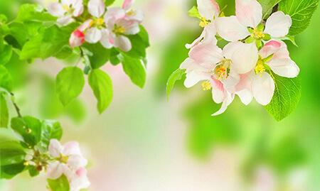 تصویرهای پوسترهای فصل بهار, تبریک فصل بهار, تصاویر آغاز فصل بهار