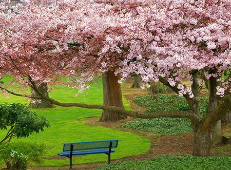 تصاویر پروفایل فصل بهار, تصاویر پشت زمینه از فصل بهار, عکس های فصل بهار