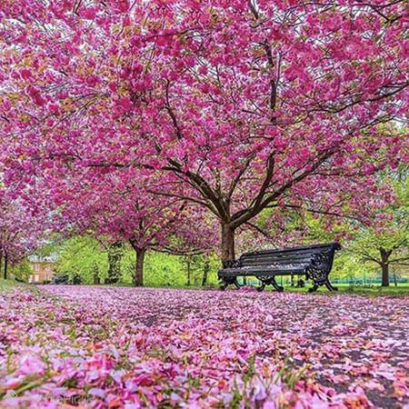تصاویر از شکوفه های بهاری,کارت پستال از طبیعت بهار,تصاویر کارت پستال های فصل بهار
