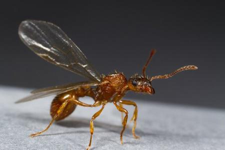 سم مورچه,مبارزه با مورچه