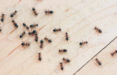 دشمن مورچه ها,از بین بردن مورچه های خیلی ریز