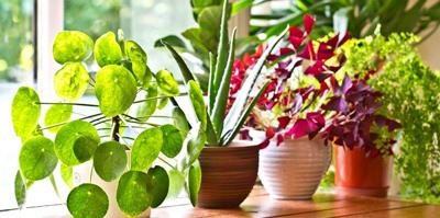 نحوه استفاده از قرص ال دی برای گیاهان,قرص آسپرین برای رشد گیاهان