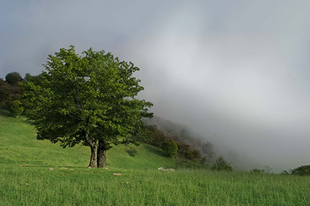 جنگل ابر شاهرود,جنگل ابر,جنگل ابر کجاست