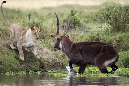 کنیا,کشور کنیا,مناطق گردشگری کنیا