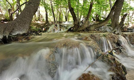 جنگل آق سو,جاذبه های دیدنی گلستان,پارک ملی گلستان