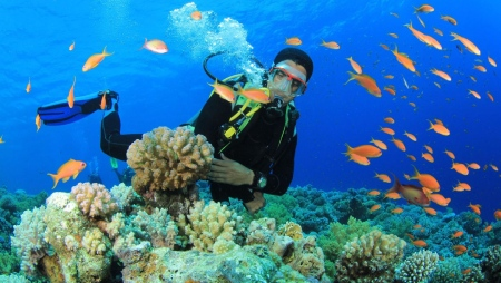 تفریحات آبی کیش,تفریحات جزیره کیش,غواصی در جزیره کیش