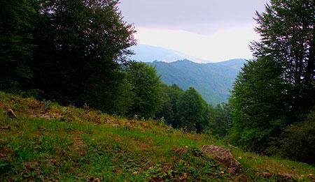 جنگل ارفع ده و چشمه پراُو در استان مازندران