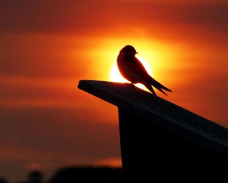 بهترین زمان برای پرنده نگری, مکانهای مناسب پرنده نگری, پرنده نگری