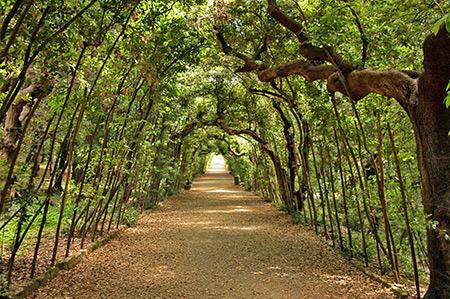 باغ های بوبولی,باغ های بوبولی از مکانهای دیدنی ایتالیا,باغ های بوبولی در فلورانس