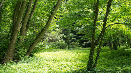 گم شدن در جنگل,پیدا کردن مسیر در جنگل,روش پیدا کردن راه در جنگل