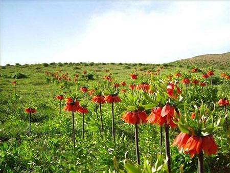 گلستان کوه,عکس گلستان کوه,گلستان کوه خوانسار