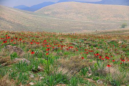 گلستان کوه,عکس گلستان کوه,آب و هوای گلستان کوه