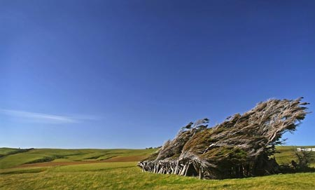 درخت های طوفانی,درخت های طوفانی در نیوزلند,عجایب طبیعی