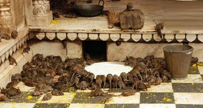 معبد,معبد کارنی ماتا